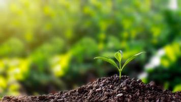 Seedlings on soil photo