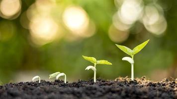 muestra las etapas de los árboles que crecen en el suelo en un entorno natural rico foto