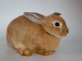 Lindos conejos con un fondo blanco, concepto de vacaciones de Pascua foto