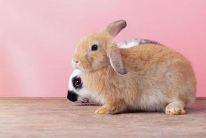 Lindos conejos con un fondo rosa, concepto de vacaciones de Pascua foto
