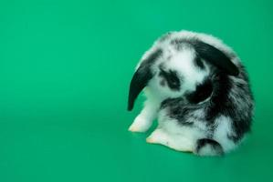 Cute bunny with a green background, Easter holiday concept photo