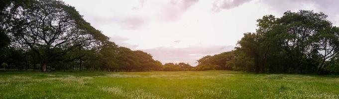 Large green park in the middle of the city for relaxing and exercising on holiday photo