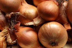 Photography of onions patern for food background photo