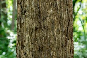 Cerrar la textura de madera de un árbol en el bosque foto