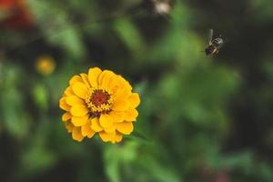 flor amarilla y abeja foto