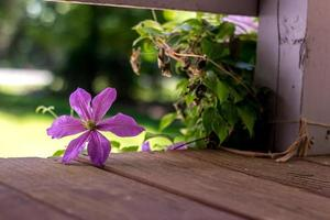 flores de pétalos de color púrpura foto