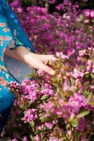 Girl in traditional clothing touching pink blossoms photo