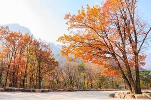 colorido, árbol, en, antumn, en, corea del sur foto