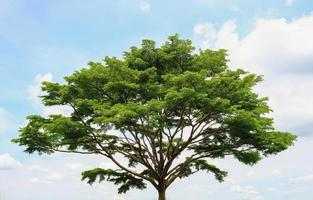a big tree against bright sky photo
