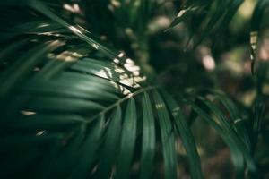 Blurred Tropical green leaf in dark tone photo