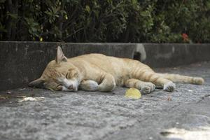 cat sleeping on footpath photo