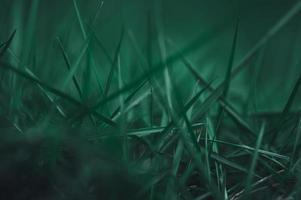 amo el medio ambiente fondo de hierba foto