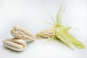 Choclo maíz blanco gigante sobre un fondo blanco. foto