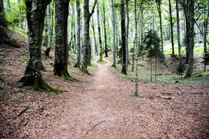 Path in the lush forest photo