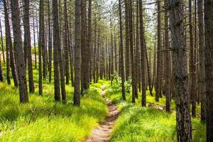 Path in the forest photo