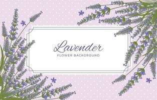 Beauty Lavender Background vector