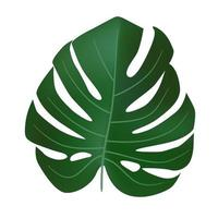 Natural Realistic Green Monstera Leaf Tropical Icon vector