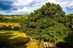 Tree with footpath photo