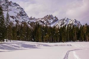 lago y pinos en los dolomitas foto