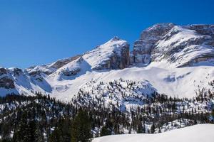picos nevados y pinos foto