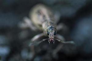 Face of weevil beetle in macro photo