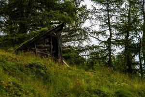 choza abandonada entre los pinos foto