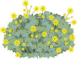 Brittlebush in cartoon style isolated on white background vector