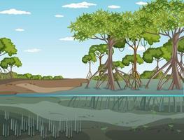 Mangrove forest landscape scene at daytime vector