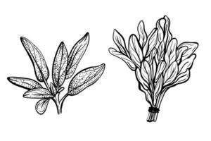 savory. hand-drawn vector illustration