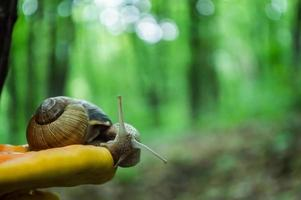 Wild little snail and mushroom closeup in the green forest photo