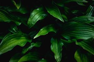 Background from green leaves photo