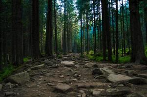 Carpathian nature Forest on green hills in summer mountains photo