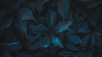 Backgtound of texture of dark leaves closeup photo