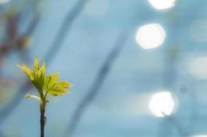 primeras hojas verdes en la rama con bokeh hexagonal foto