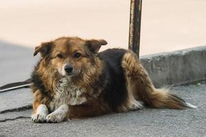 Cute dog lies on the pavement photo