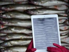 Person takes pictures on a tablet of caught fish photo