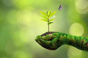 Female hand holding tree on nature background photo