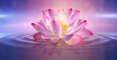 Pink lotus floating photo