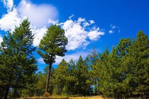 día de verano en el parque chautauqua en boulder, colorado foto