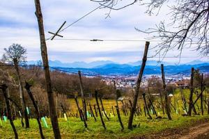 el viñedo se despierta del invierno foto