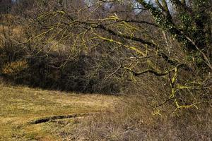 Forest on the Berici Hills near Zovencedo, Vicenza, Italy photo