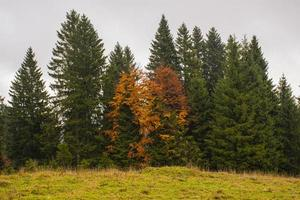 Día nublado de otoño en la meseta de Asiago, cerca de Vicenza, Italia foto