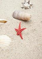 Seashells on white sand photo