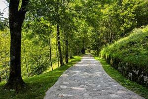 camino entre árboles verdes foto