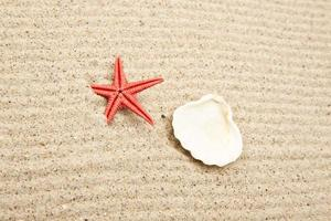 Pearl on the seashell photo