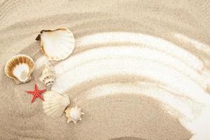 Set of Seashells photo