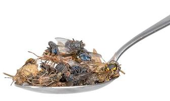 Many dead insects lie on a tablespoon isolated photo