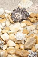 Sea shells and stones photo