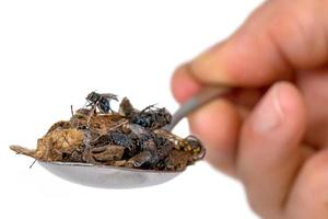 Many dead insects lie on a tablespoon held in the hand  isolated photo