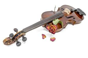Old shiny violin with withered red yellow rose blossom photo